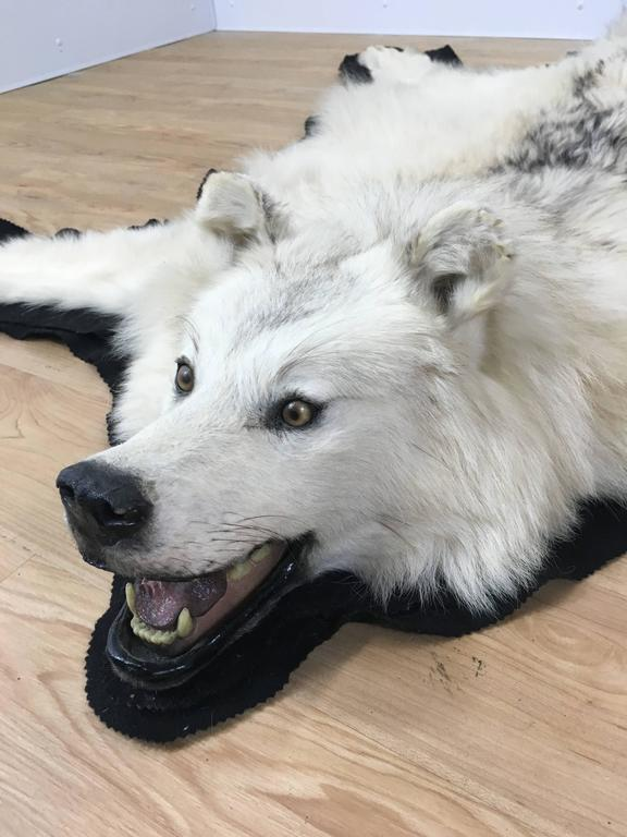 Vintage White Wolf Skin Rug For Sale at 1stdibs