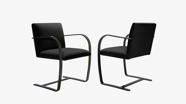 Mid-Century Modern Brno Flat-Bar Chairs in Noir Velvet, Obsidian Gloss Frame, Set of Ten For Sale