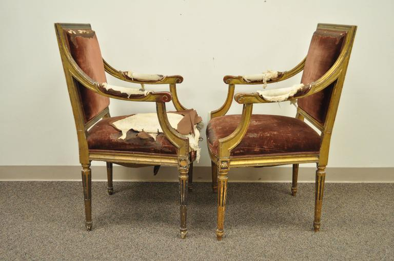 Pair of Gold Giltwood 19th Century French Louis XVI Style Dining Armchairs In Distressed Condition For Sale In Philadelphia, PA
