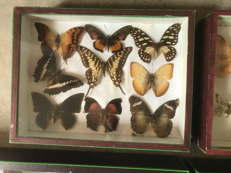 Set of Six Butterfly Collection Boxes from Paris, circa 1960 For Sale 1
