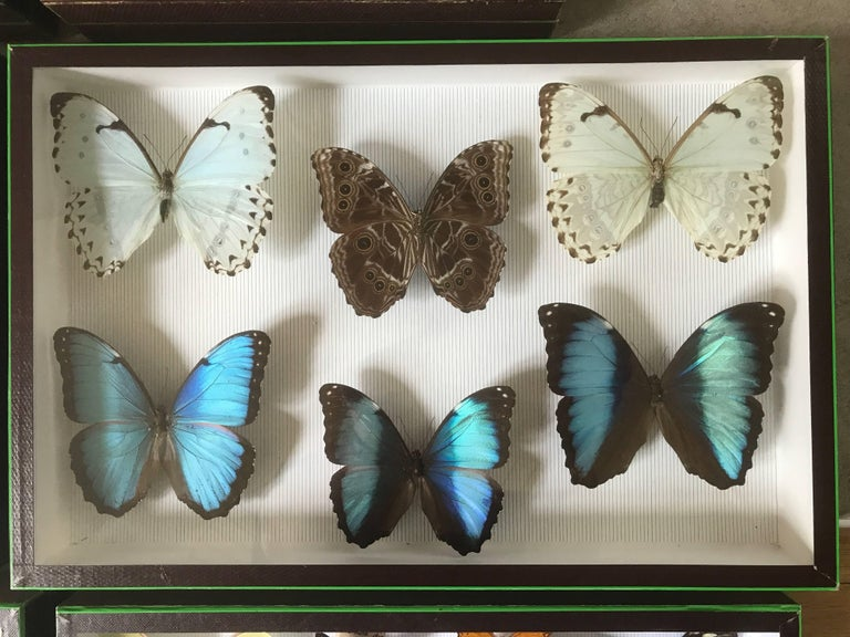 Set of Six Butterfly Collection Boxes from Paris, circa 1960 For Sale 2