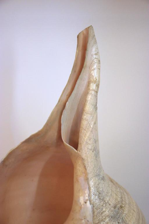 Mid-Century Modern Anthony Redmile, Seashell Lamp, Signed, circa 1970, France For Sale