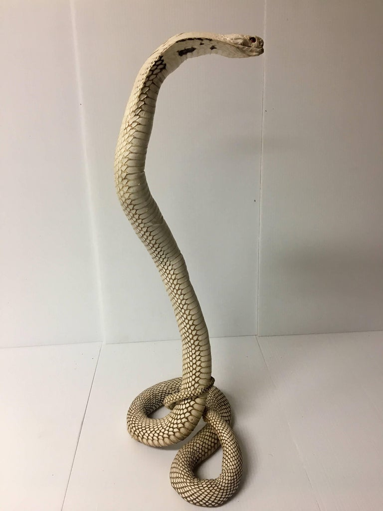 authentic king cobra snake taxidermy sculpture vintage rare at 1stdibs
