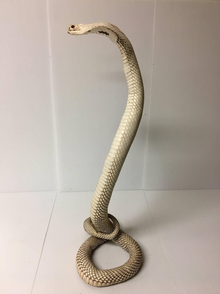 Authentic King Cobra / Snake Taxidermy Sculpture Vintage Rare at 1stdibs