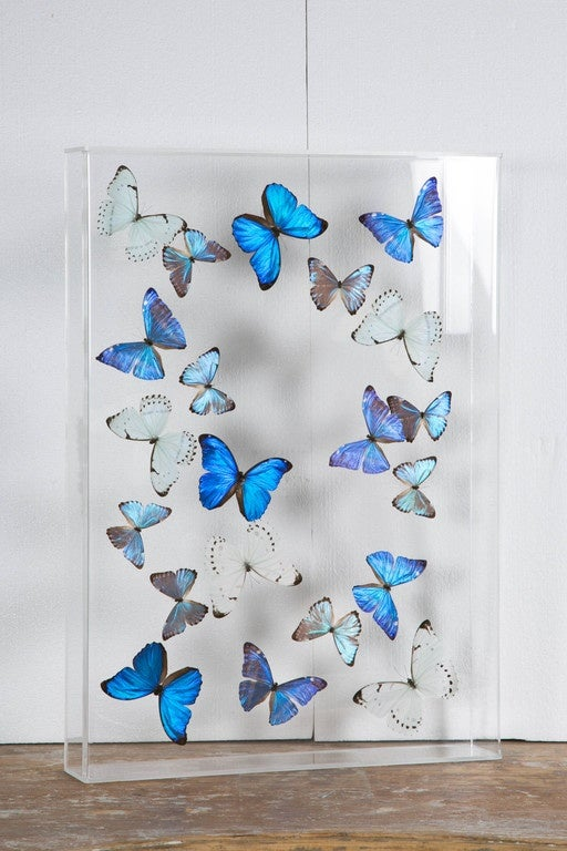 Flight Of Morphos Butterflies In Lucite Case By Atelier L