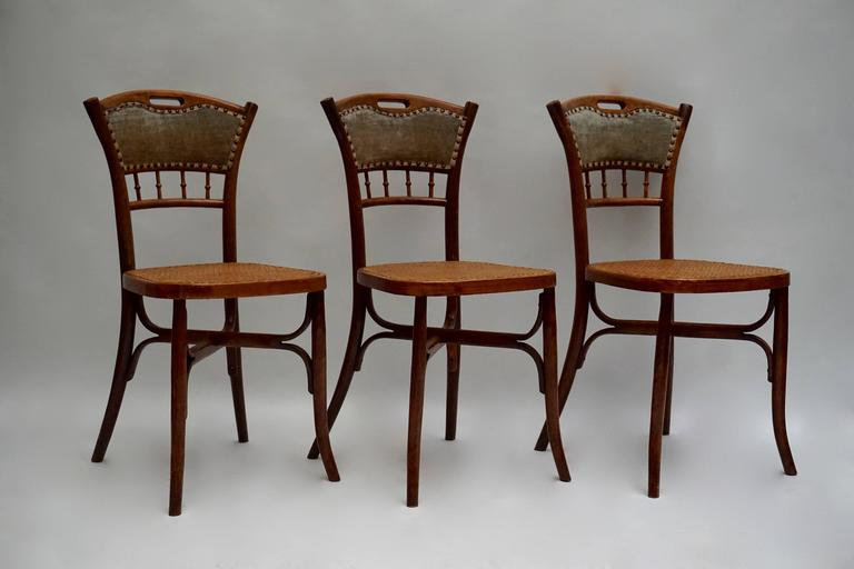 Great set of 48 chairs in wood with cane seats.