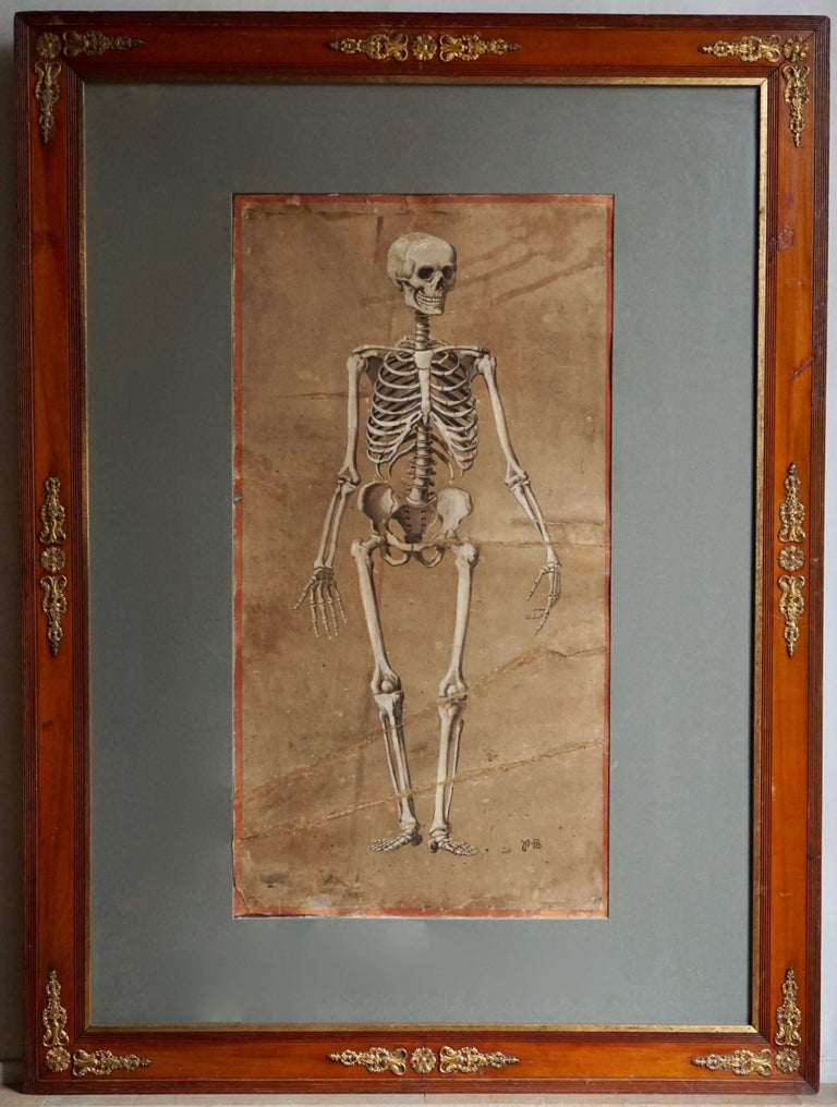 A spectacular and rare pair of watercolor on cardboard paintings representing a human skeleton from the front and from the back, surrounded by a red painted band. Monogrammed: A.B., late 19th century. Possibly due to their former use in a didactic