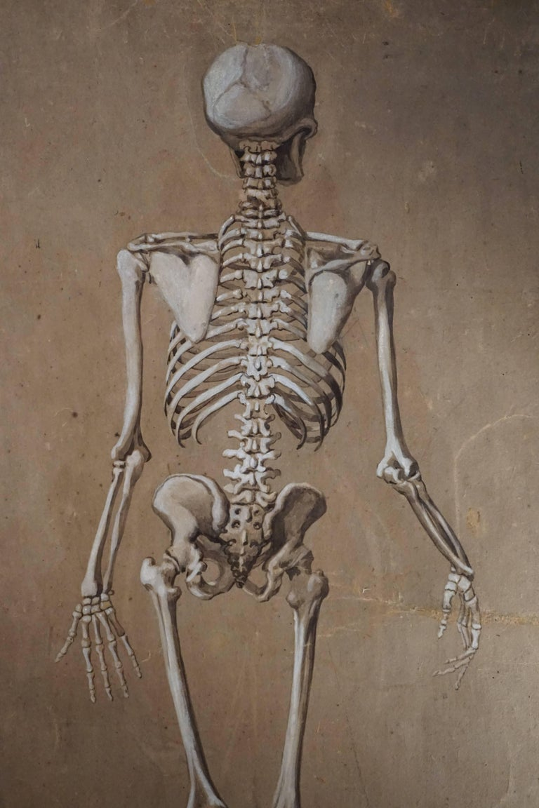Hand-Painted Spectacular and Rare Pair of Watercolor Paintings Representing a Skeleton For Sale