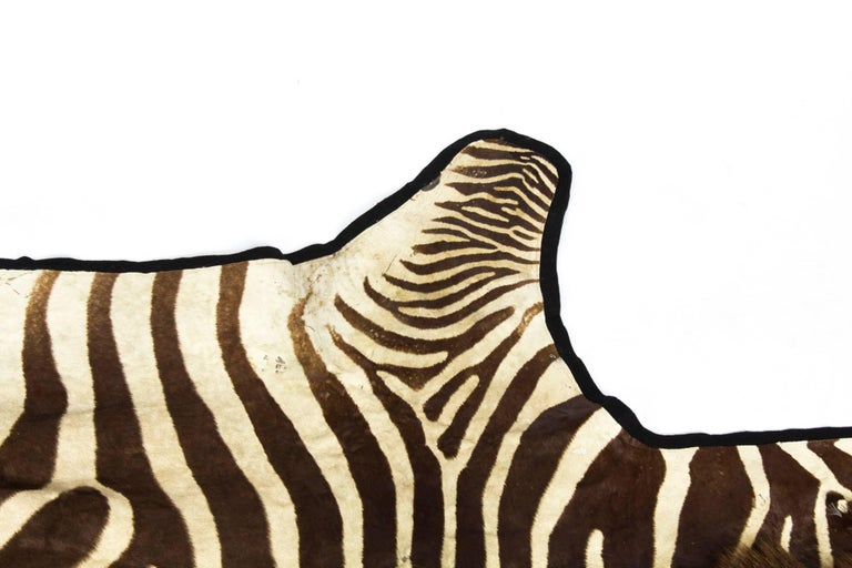 Vintage Taxidermy Zebra Skin Rug with Felt Backing, circa 1970 In Excellent Condition For Sale In London, GB