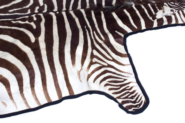 Animal Skin Vintage Taxidermy Zebra Skin Rug with Felt Backing, circa 1970 For Sale