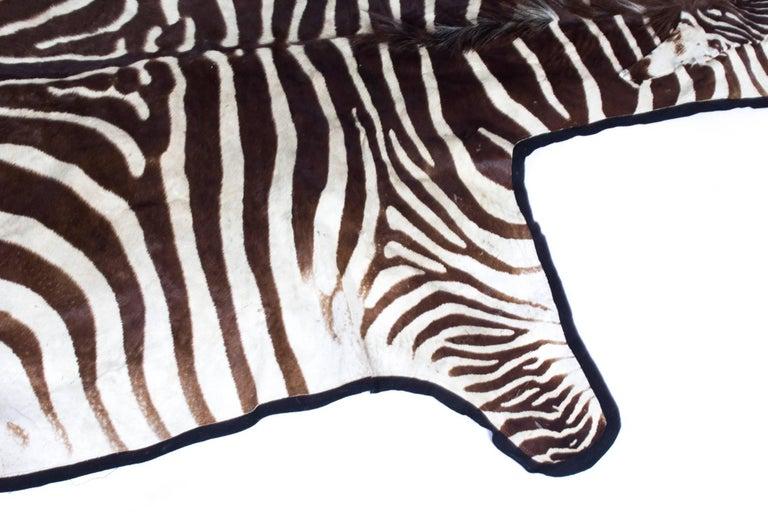 Vintage Taxidermy Zebra Skin Rug with Felt Backing, circa 1970 5