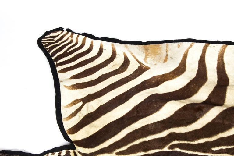 Late 20th Century Vintage Taxidermy Zebra Skin Rug with Felt Backing, circa 1970 For Sale