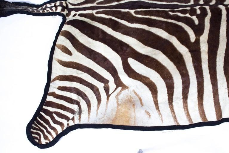 Vintage Taxidermy Zebra Skin Rug with Felt Backing, circa 1970 6