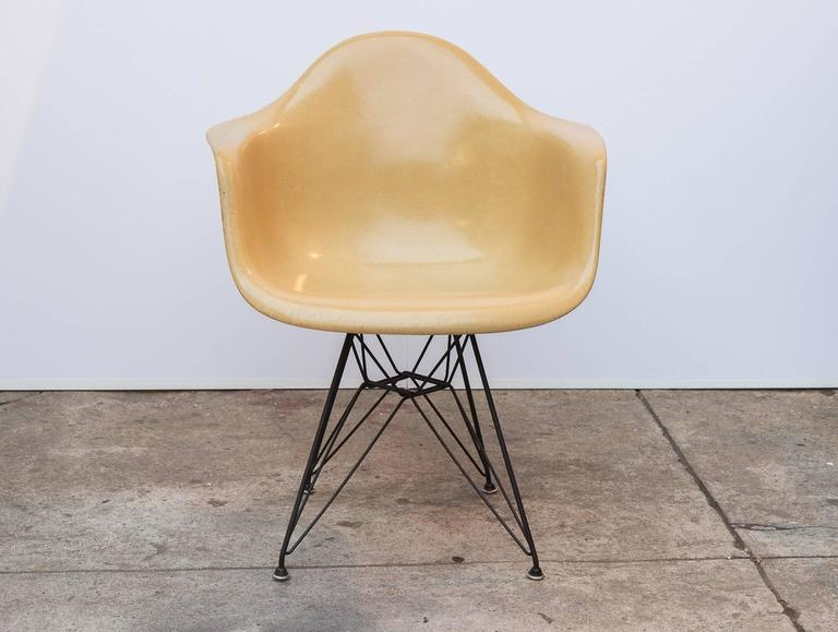 Classic Charles And Ray Eames Molded Fiberglass Armchair In Butterscotch On  The Black Eiffel Base For