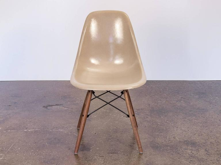 High Quality Eames Fiberglass Greige Shell Chairs On Walnut Dowel Base 2