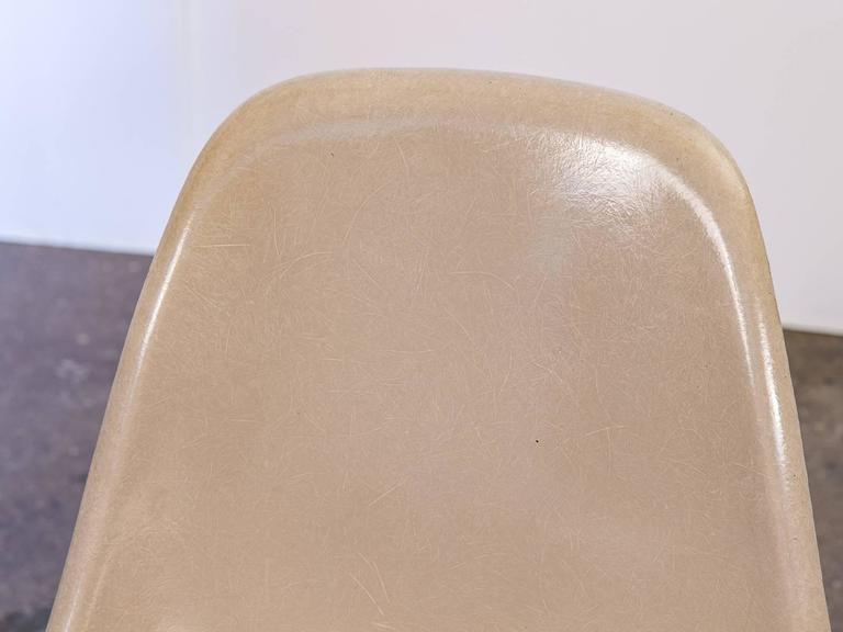 Eames Fiberglass Greige Shell Chair on Walnut Dowel Base For Sale 1
