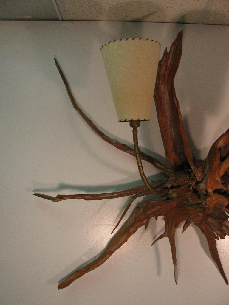 American Amazing Pair of Mid-Century Modern Sun Bleached Root Wall Sconces For Sale