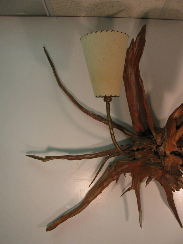 Mid-20th Century Amazing Pair of Mid-Century Modern Sun Bleached Root Wall Sconces For Sale