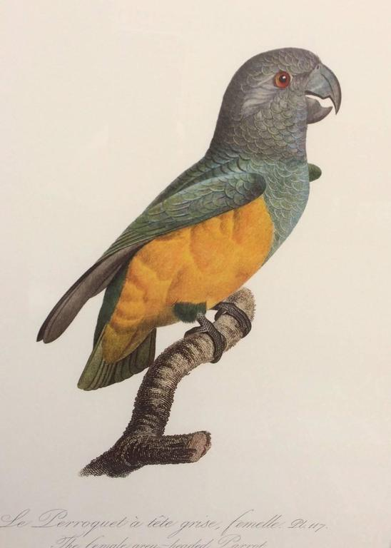 Colored Lithograph Of Parrots From Historie Naturelles Des Perroquets For Sale At 1stdibs