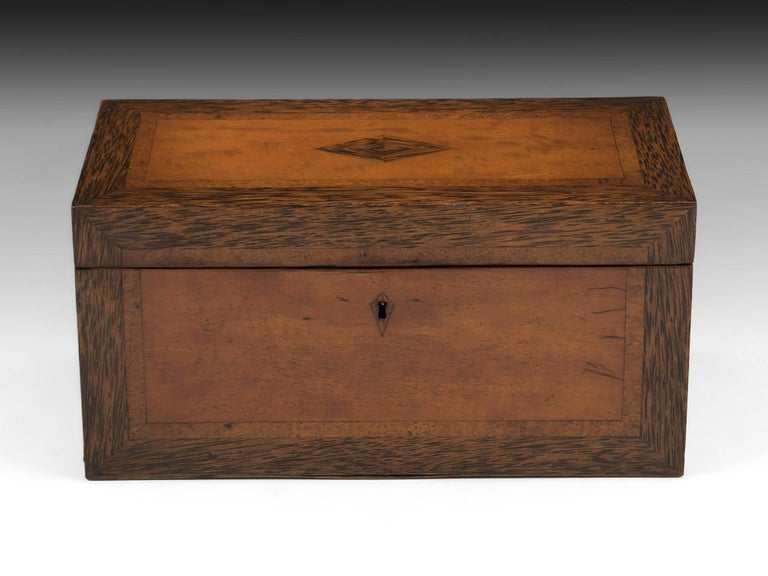 Satinwood tea chest with coconut wood mitred edging on all sides along with a framed amboyna inlay.   The exotic satinwood tea chest interior features two removable tea caddies with coconut wood edging to match the exterior and each tea caddy is
