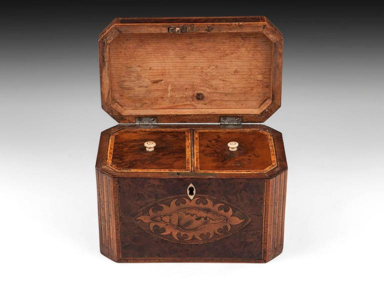 Bone Antique Georgian Burr Yew Tea Caddy For Sale
