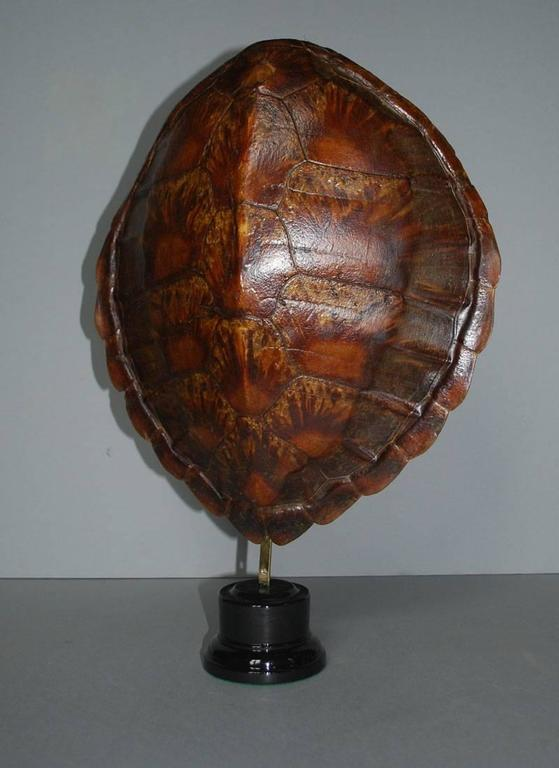 20th century sea turtle shell shield on new stand. Originates Indonesia, dating circa 1930. (Dimensions excl. stand).