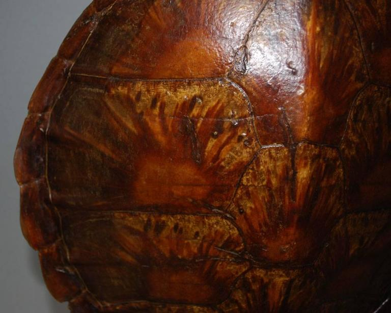 20th Century Sea Turtle Shell Shield on Stand In Good Condition In Casteren, NL