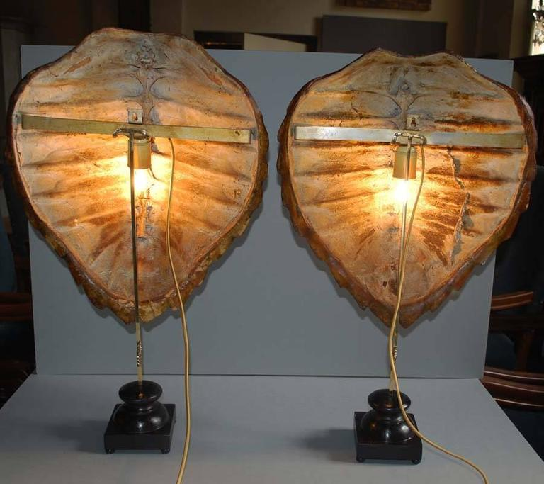 20th Century Wall Lights Or Table Lamps Made From Sea Turtle Shells