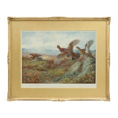 Antique Shooting Picture Game Birds by Archibald Thorburn 1927