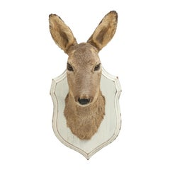Vintage Roe Deer on Shield