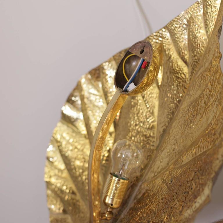 Italian Pair of  Huge Rhaburb Leaf Brass Wall Lights or Sconces by Tommaso Barbi For Sale