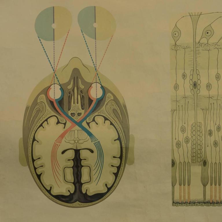 Original German Anatomical Poster at 1stdibs