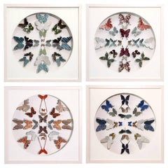 Antique Marbled End Paper Butterflies