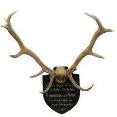 Antique Black Forest Deer Trophy from Salem, Germany, 1876