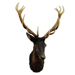 Great Lifesize Black Forest Stag Head, Made of Plaster, circa 1890