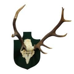 Vintage Deer Trophy Spain 1980 with Twelve Ends