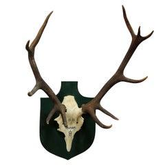 Vintage Deer Trophy Spain, 1980 with Twelve Ends