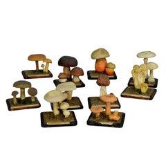 Ten Vintage Mushroom Teaching Models Scientific Specimen
