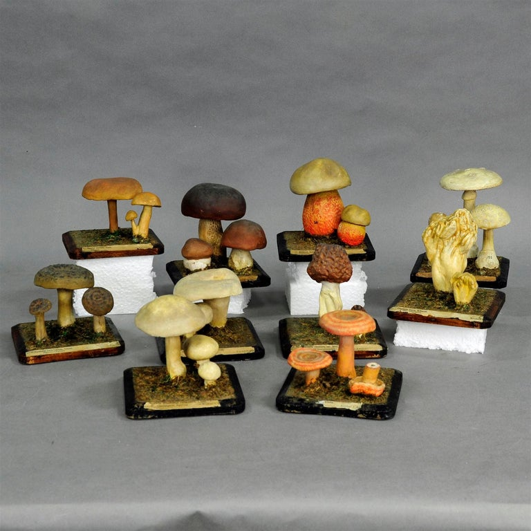 A bunch of ten mushroom vintage school models made of wood and paper mâché (some labels in German and Latin language). A label inscription of each part is fastened underneath. Used as teaching material in German schools, circa 1930.  Measures: