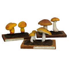 Three Vintage Mushrooms School Model Scientific Specimen
