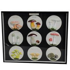 Vintage School Teaching Display Poisonous Mushrooms