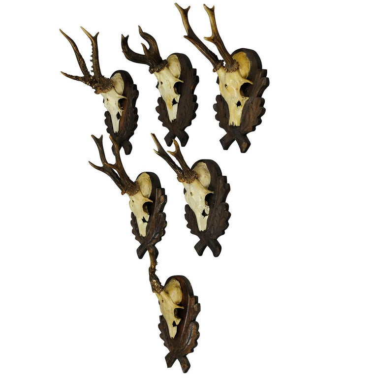 Six Large Vintage Deer Trophies on Wooden Carved Plaques