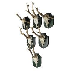 Six Great Black Forest Deer Trophies from Palace Salem