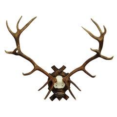 Impressive 16 Pointer Deer Trophy on Plaque Black Forest, 1917