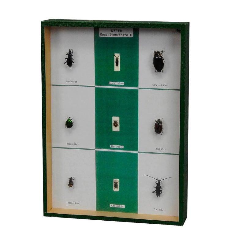 a great vintage school teaching display - diversity of beetle shapes