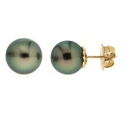 Tahitian Pearl Stud Earrings in Yellow Gold