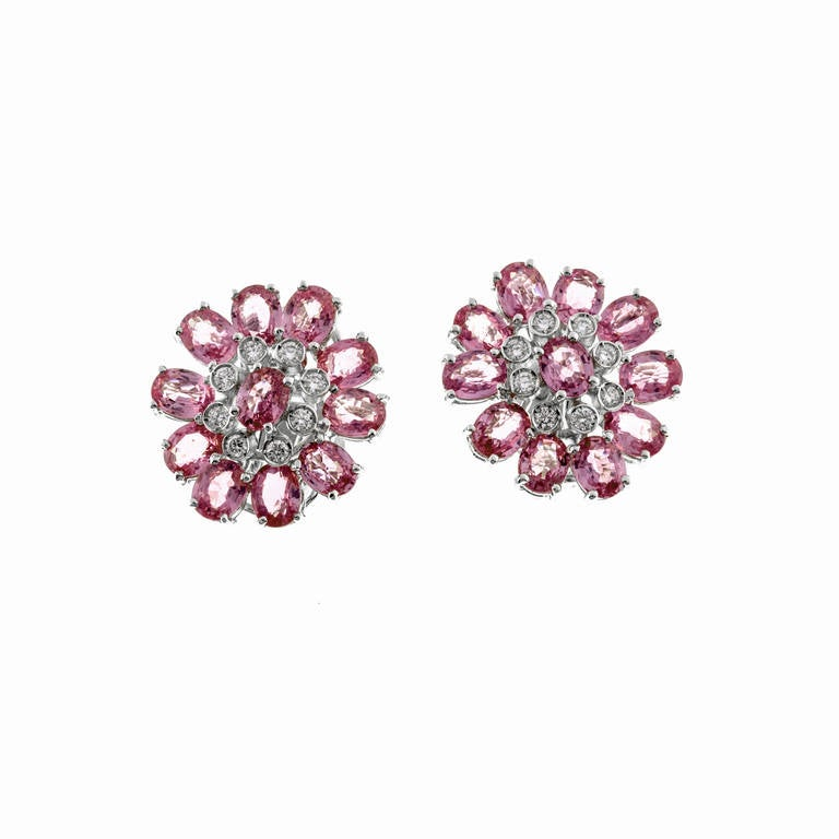 Beautiful cluster style clip post earrings with a hidden hook on the back to hang a pearl or other drop. Beautiful on their own.  22 oval bright medium pink Sapphires, well cut, approx. total weight 11.00cts, VS2 to SI1, natural color simple heat