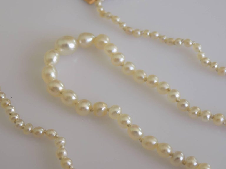 A Lovely mid Victorian Natural Seed Pearl necklace on Yellow Gold and split Seed Pearl