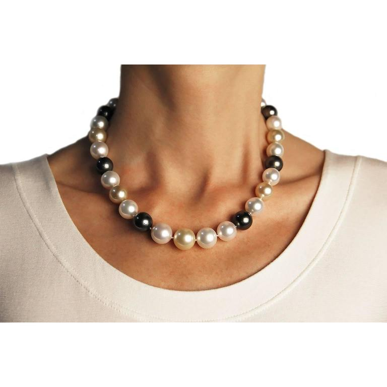 Eighteen inch long necklace consisting of thirty three, 0.45 - 0.55 in.(11.5-14.1mm ), white, gold and black South Sea pearls, the pearls are strung with an invisible clasps .  Pearl Quality: AA Pearl Luster: AA The Origin of the pearls are: