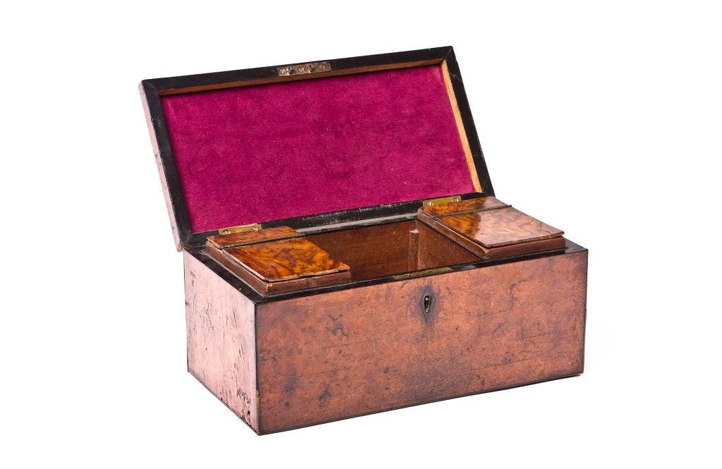 William VI Burr Walnut Tea Caddy 3